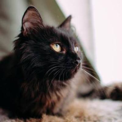 Потрібні кошти для лікування котиків