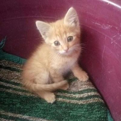 Кошеня терміново шукає дім