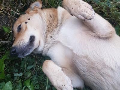 Вбивцю, що жорстоко застрелив двох собак...