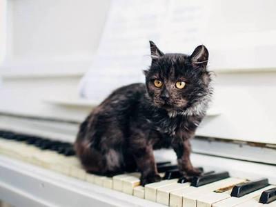 Колись викинутий, як непотріб, котик Бруно...